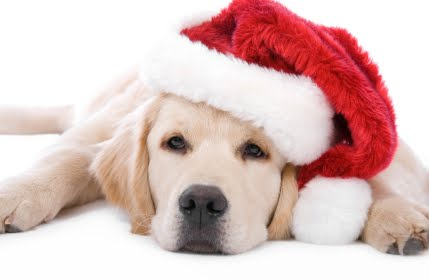 wallpaper puppies. Christmas puppy wallpapers