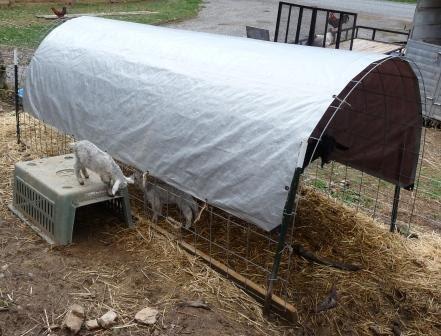 Mountain Hollow Farm Goat Shelter