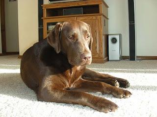 Mushy Dog Dakota