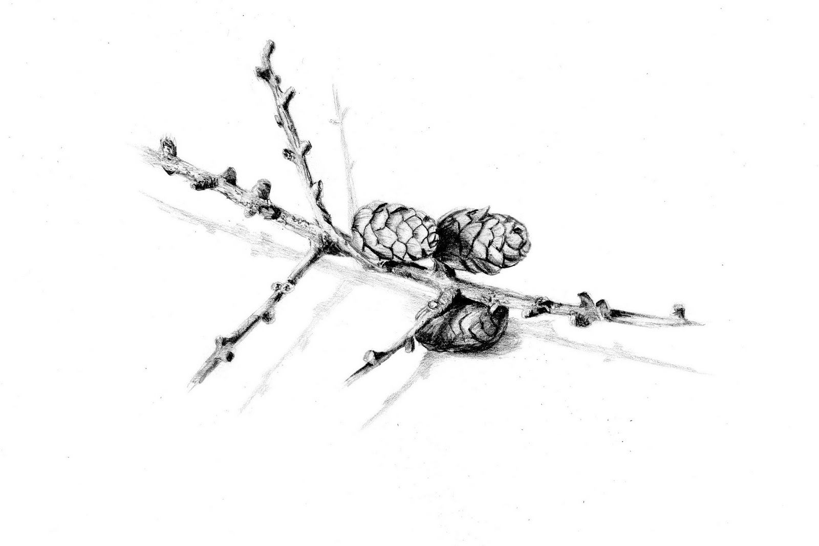 Nature Objects Drawing to Draw Natural Objects as