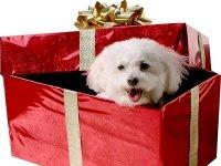 Mascotas regalo