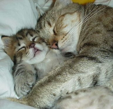 ... is The Way of Life: Kenapa Kucing Menjadi Binatang