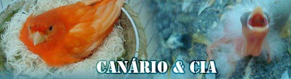 Canário e CIA