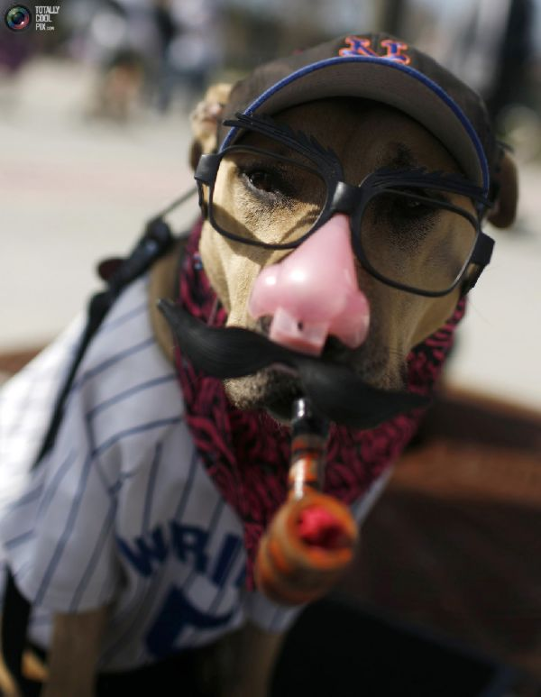 Funny Dogs Dressed Up