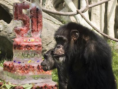 keo chimp birthday