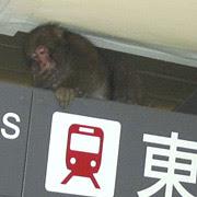 rogue monkey tokyo