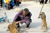 abused monkeys