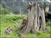 monkey herpes park