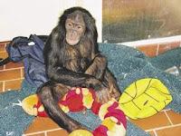 nathan bonobo