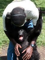 gorilla orphan