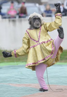 chimp ballet