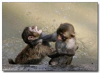 Monos? 6 cosas que no sabias de los monos