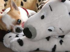 Disco et Pongo