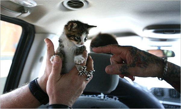 [biker+cat.jpg]