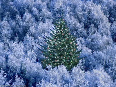 Christmas Nature View HD Desktop Wallpapers