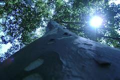 Luz de madera