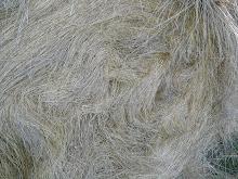 les poils des champs