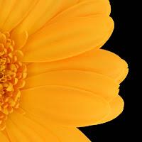 wallpaper bunga terbaru, gambar bunga cantik