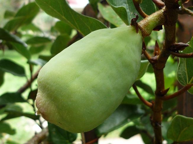 climbing plants pokok memanjat agrobio solutions