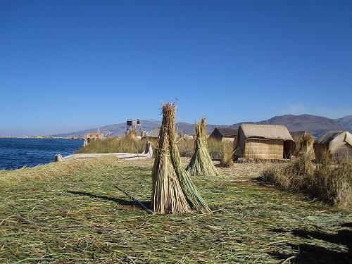 Schilf Chumi Titicacasee
