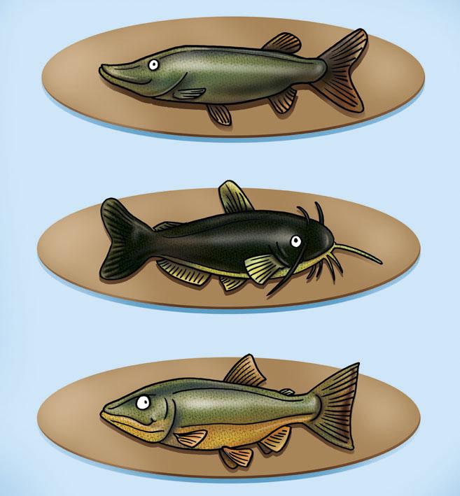 Cosoecose acqua di pesci dolci dolci di pesce acquati for Pesci acqua dolce resistenti
