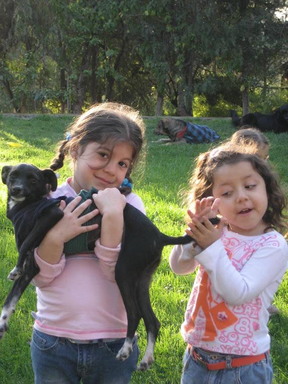 Gabi, Mica y Pucca