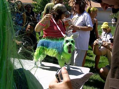 Alien dog costume