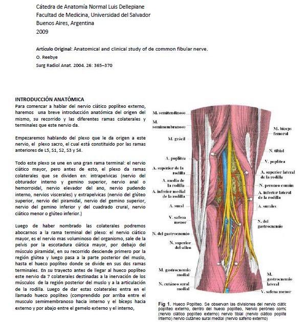 Área de TP y Escuela: ARTÍCULO: Estudio clínico y anatómico del ...