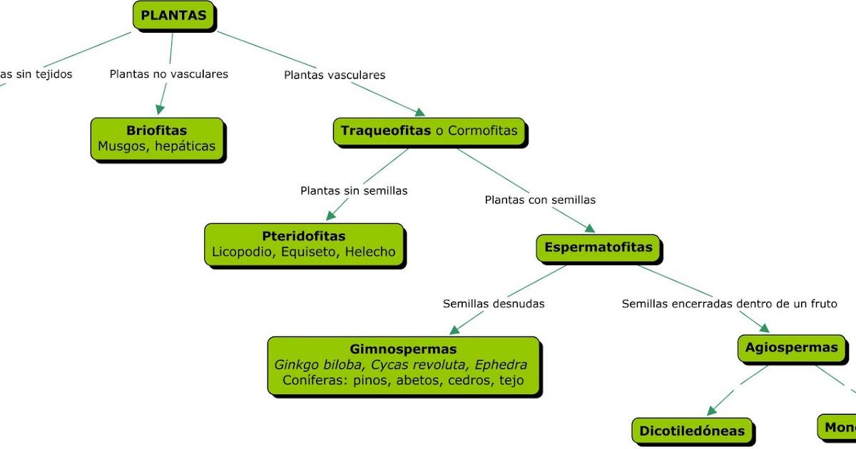 Biolog a y geolog a clasificaci n de las plantas for Clasificacion de las plantas ornamentales