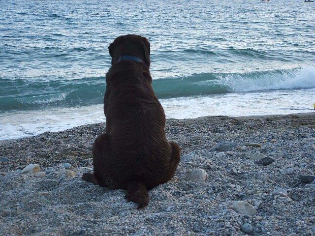 meditazione canina
