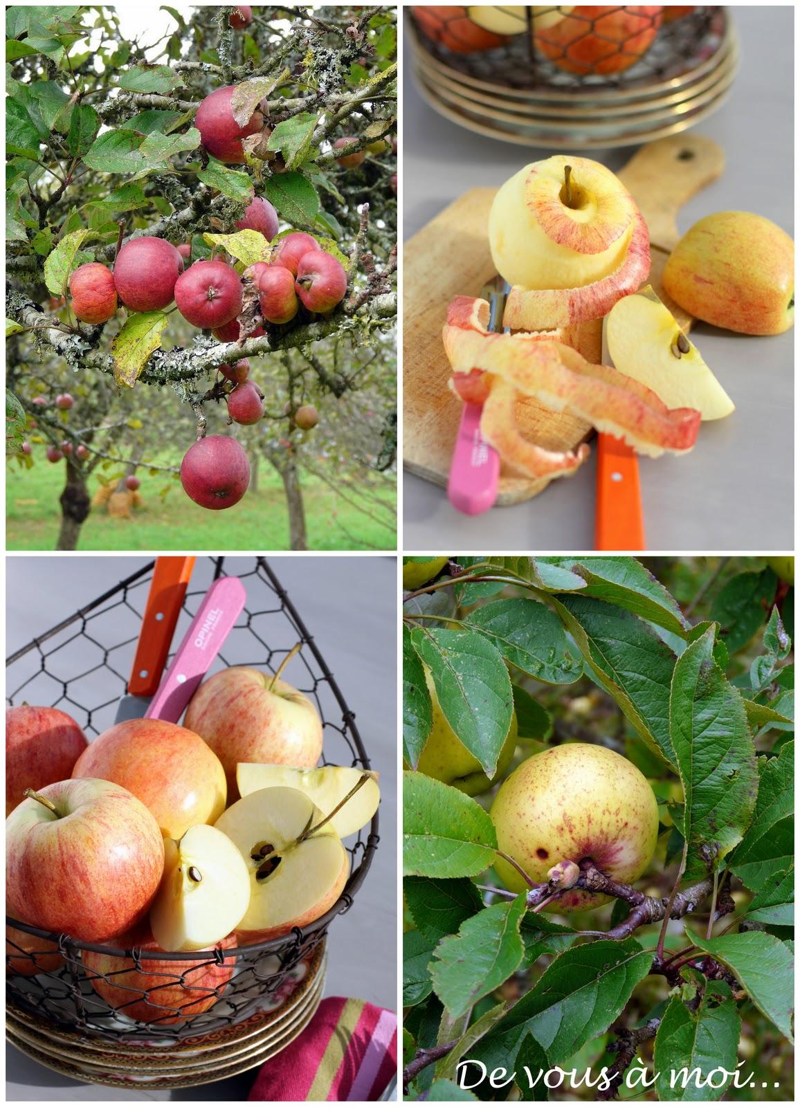 De vous moi tarte aux pommes ma fa on - Tarte soleil aux pommes ...