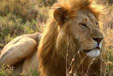 Libros del león