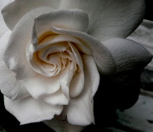 Gardenia You're Lovely