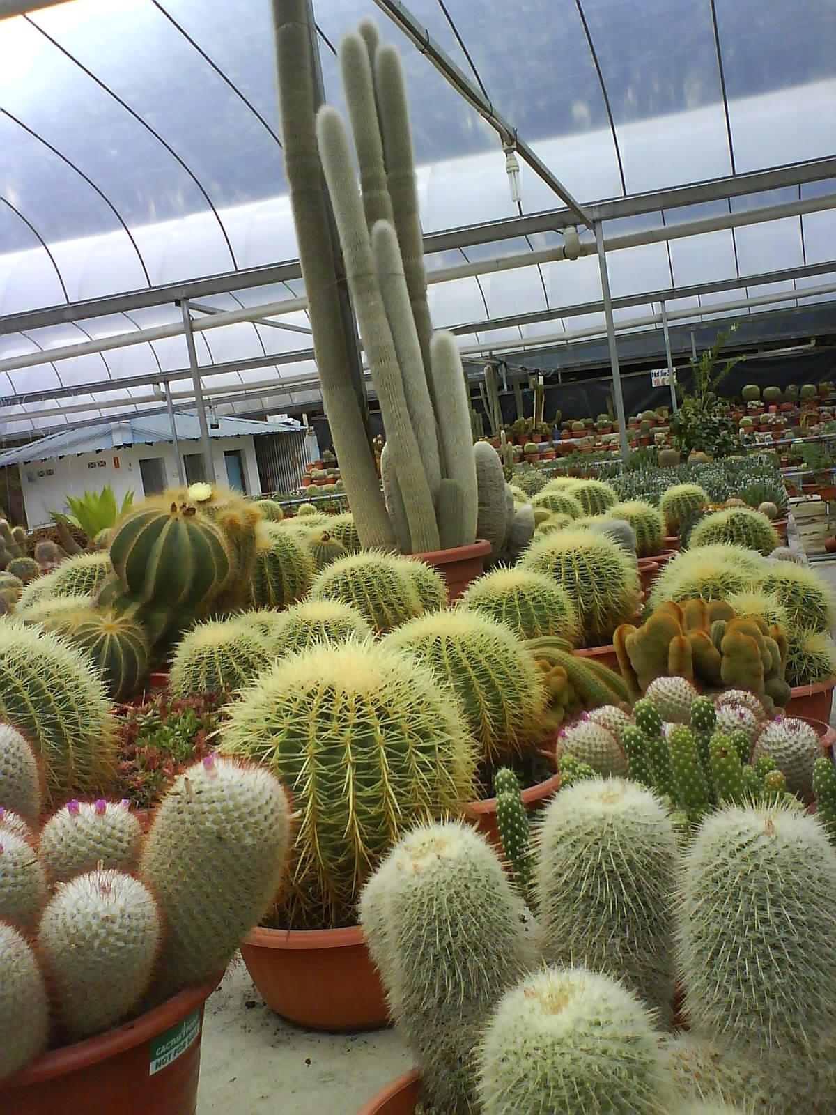 kaktus yg cantik tapi berduri..