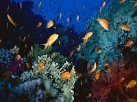 sfond oqean theme