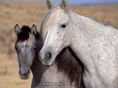 http://1.bp.blogspot.com/_-x7gqq9QJuA/TH4A75ZdvDI/AAAAAAAAQ6Y/nCFXGJ7jzik/s1600/animals_vs_humans_14.jpg