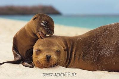 http://1.bp.blogspot.com/_-x7gqq9QJuA/TH4AVqCijeI/AAAAAAAAQ44/YpHw8hW5tso/s1600/animals_vs_humans_02.jpg