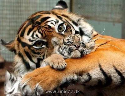 http://1.bp.blogspot.com/_-x7gqq9QJuA/TH4AXcm3YTI/AAAAAAAAQ5Q/5dNyuRUnGfM/s1600/animals_vs_humans_05.jpg