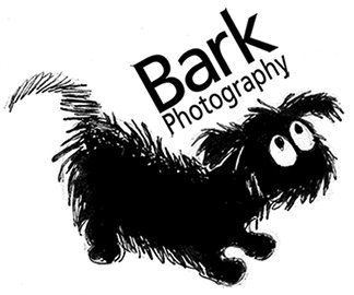Bark Photography