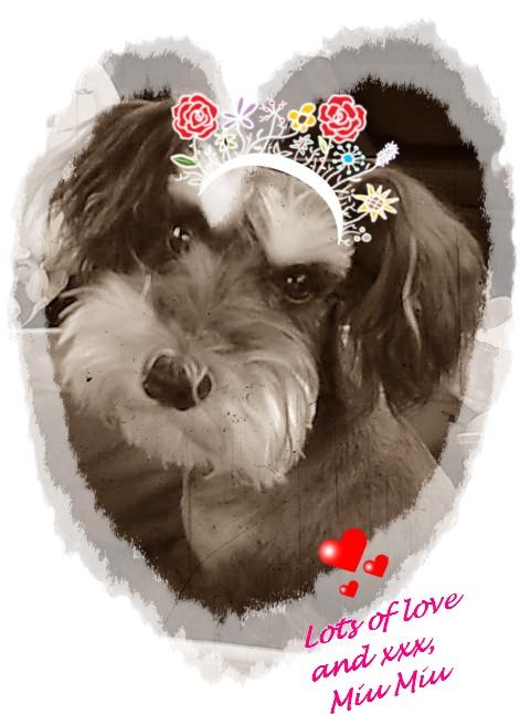 Miu Miu ~ The Lovely Diva Princess