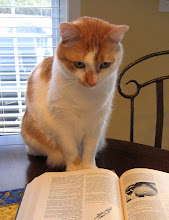 baby kitty studying the Larousse Gastronomique