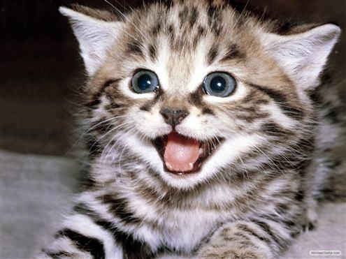 senyuman yg menawan