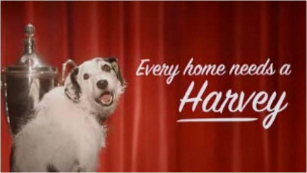 Every home needs a harvey kuriositas for Every dog needs a home