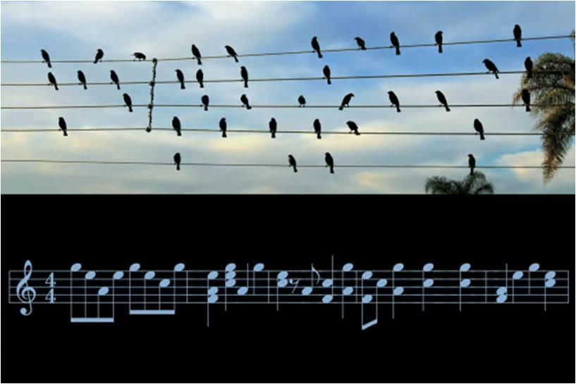 http://1.bp.blogspot.com/_-zOrAL1V5Jg/TJR0KNXKMSI/AAAAAAAAHcw/d6L74h7KV94/s1600/birds+on+a+wire.jpg