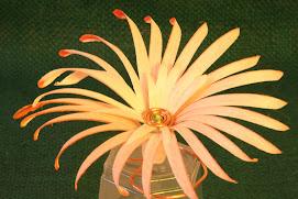 fleur individuelle