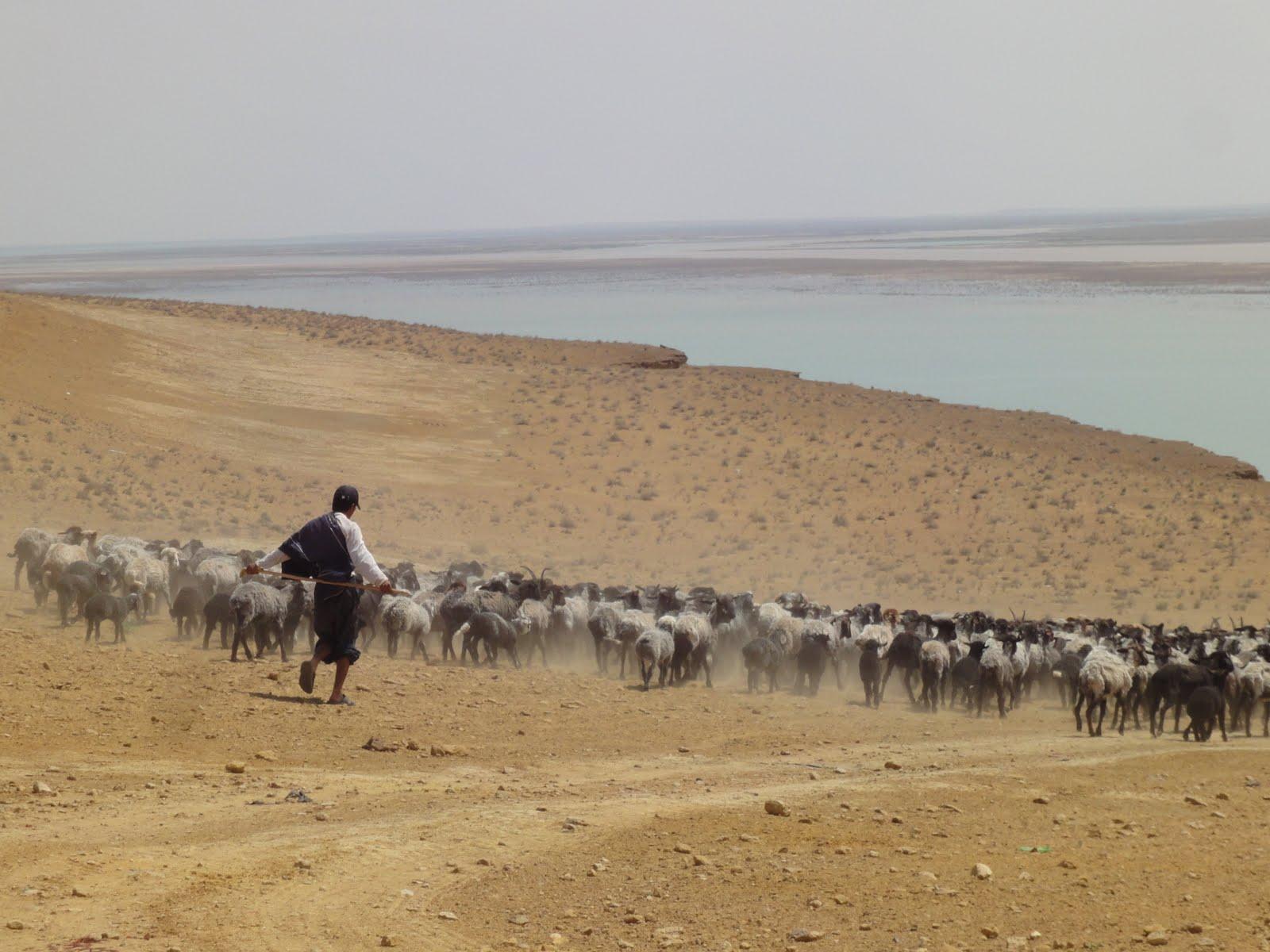 Where Is The Kyzylkum Desert Khiva is an oasis in the kyzylKyzylkum Desert