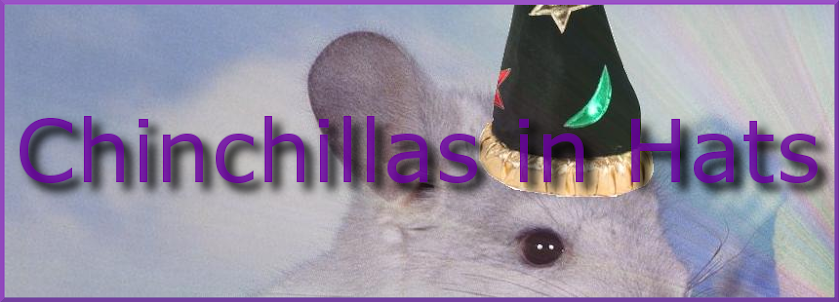 Chinchillas in Hats