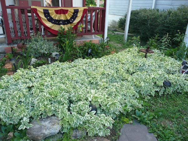 PrimThymes Garden's