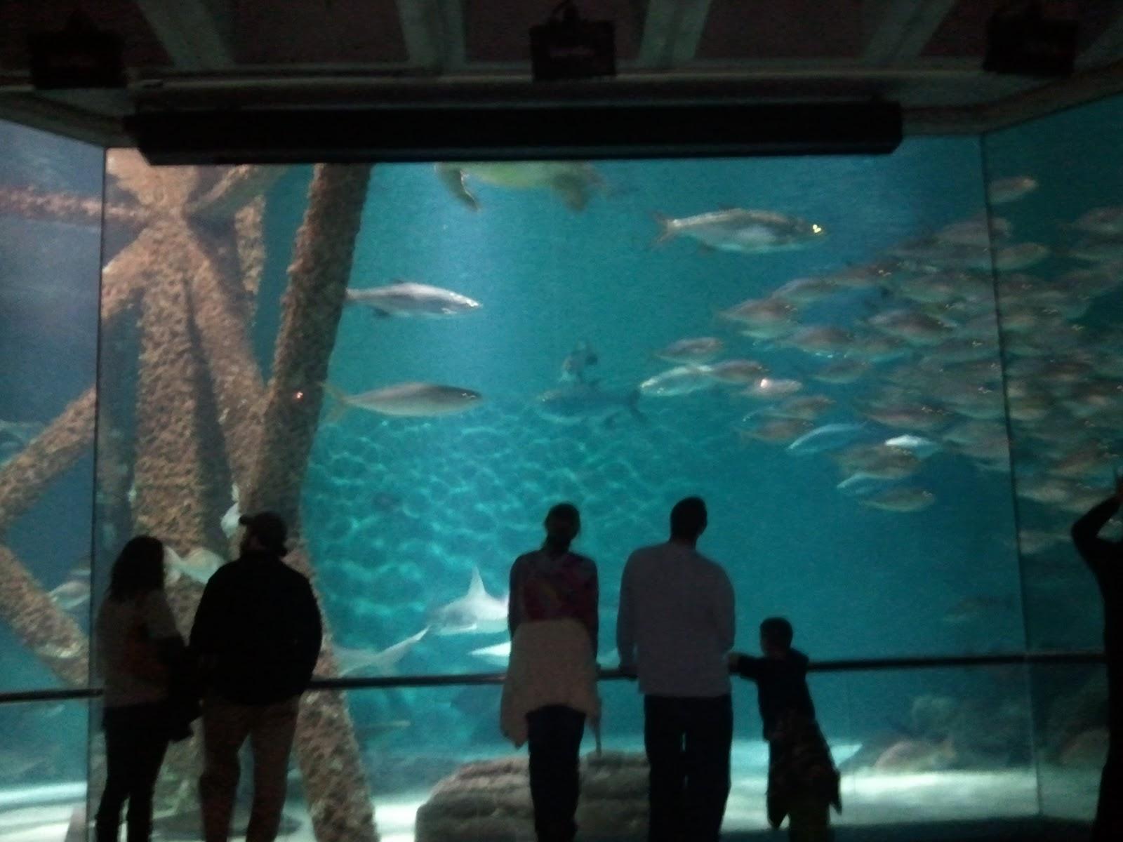 Lousiana Super Tourist Audubon Aquarium Of The Americas