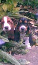 Lewis & Monty